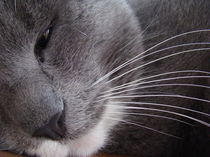 Katze by Franciska Distler