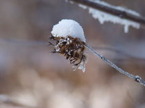 Wintertraum von Franciska Distler