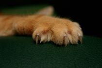 katzenpfötchen... von fototatort