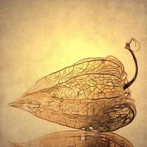 Physalis by piri