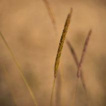 Grasflüstern von piri