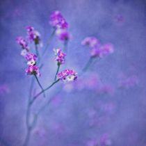 Sea Lavender von piri