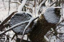 eingeschneite Bäume by Katrin Lübeck