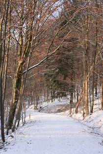 Winter im Steigerwald by Katrin Lübeck