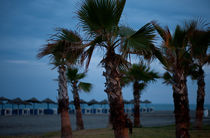 Palmen in der Dämmerung by Michael Guntenhöner