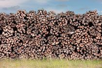 Holz von Michael Guntenhöner