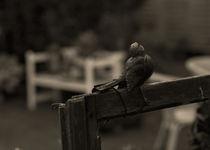 Ich wollt, ich wär ein Vogel by Michael Guntenhöner