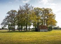 Eichenrund mit Hütte von Michael Guntenhöner