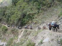Pferdetransport in Peru by Schernberg Erwin