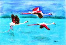 Flamingo by Heidrun Gonschorek