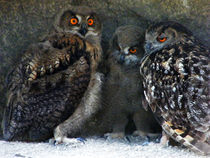 Family of Owls von Eye in Hand Gallery