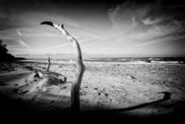 driftwood by Enrico Heuer