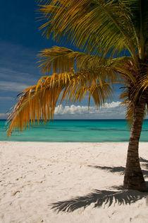 Palme auf der Insel Saona von frederic