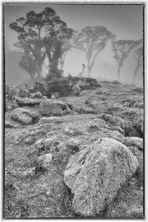 Cloud Forest Remnant von Gregory Basco