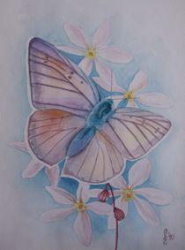 Violetter Feuerfalter by Sabrina Hennig