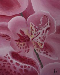 Orchidee II by Sabrina Hennig