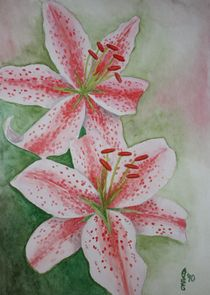Lilien von Sabrina Hennig