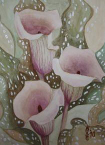 Callas by Sabrina Hennig