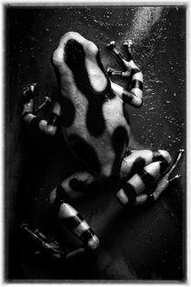 Monochrome Poison von Gregory Basco