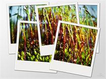 Regenwald von Oliver Lege