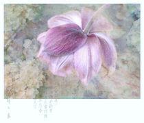 little geisha by larac