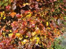 Herbstblätter von Wolfgang Wende
