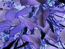 Blaue Blätter von Wolfgang Wende