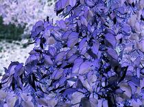 Blaue Blätter mit Aussicht von Wolfgang Wende