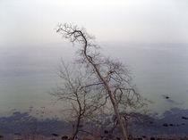 Baum am Meer von Wolfgang Wende