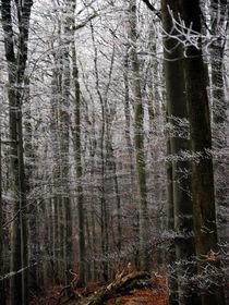 Naturstruktur 6 von Wolfgang Wende