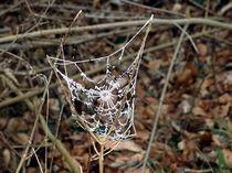 Spinnennetz von Wolfgang Wende