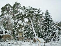 Schneebäume von Wolfgang Wende