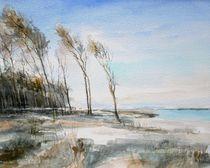 Windflüchter am Darss von Matthias Kriesel