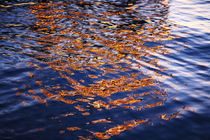 Spiegelung im Wasser by Thomas Jäger