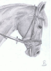 Pferdeportrait Asta von Katharina Buhs