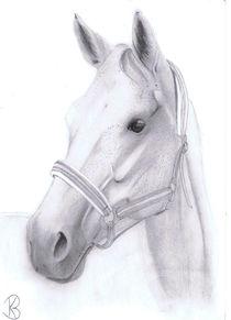 Pferdeportrait Alexa von Katharina Buhs