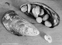 Muscheln und Steine by Diana Reimansteiner