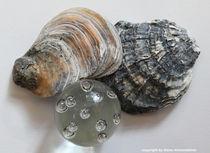 Austern mit Glas von Diana Reimansteiner