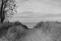 Der Weg by Diana Reimansteiner