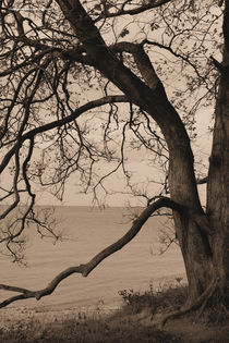 Vertäumte Bucht von Diana Reimansteiner