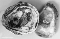 Austernpaar by Diana Reimansteiner