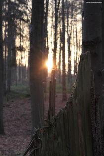 Waldblick von Diana Reimansteiner