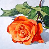 Rose by Klaus Boekhoff