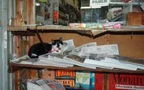 New York City - Katze by Doris Krüger