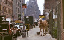 New York City - Ein Pferd by Doris Krüger