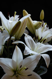 Lily family by Peter Steinhagen