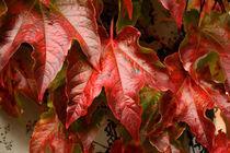 Red Autumn by Peter Steinhagen