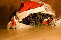 Frohe Weihnachten by lauras