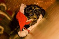 Frohe Weihnachten von lauras