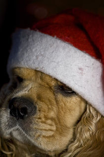 Weihnachtsmütze von lauras